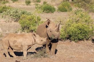 black rhino safari
