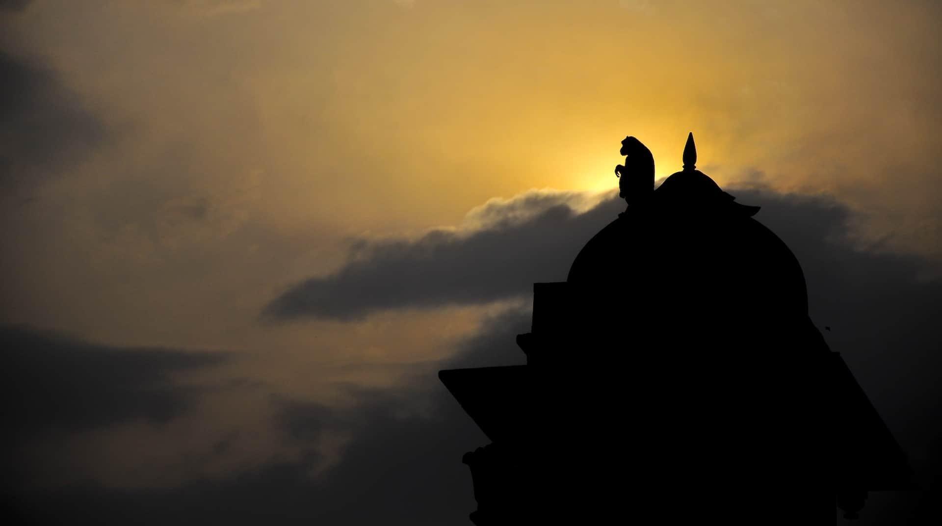 Monkey on a temple
