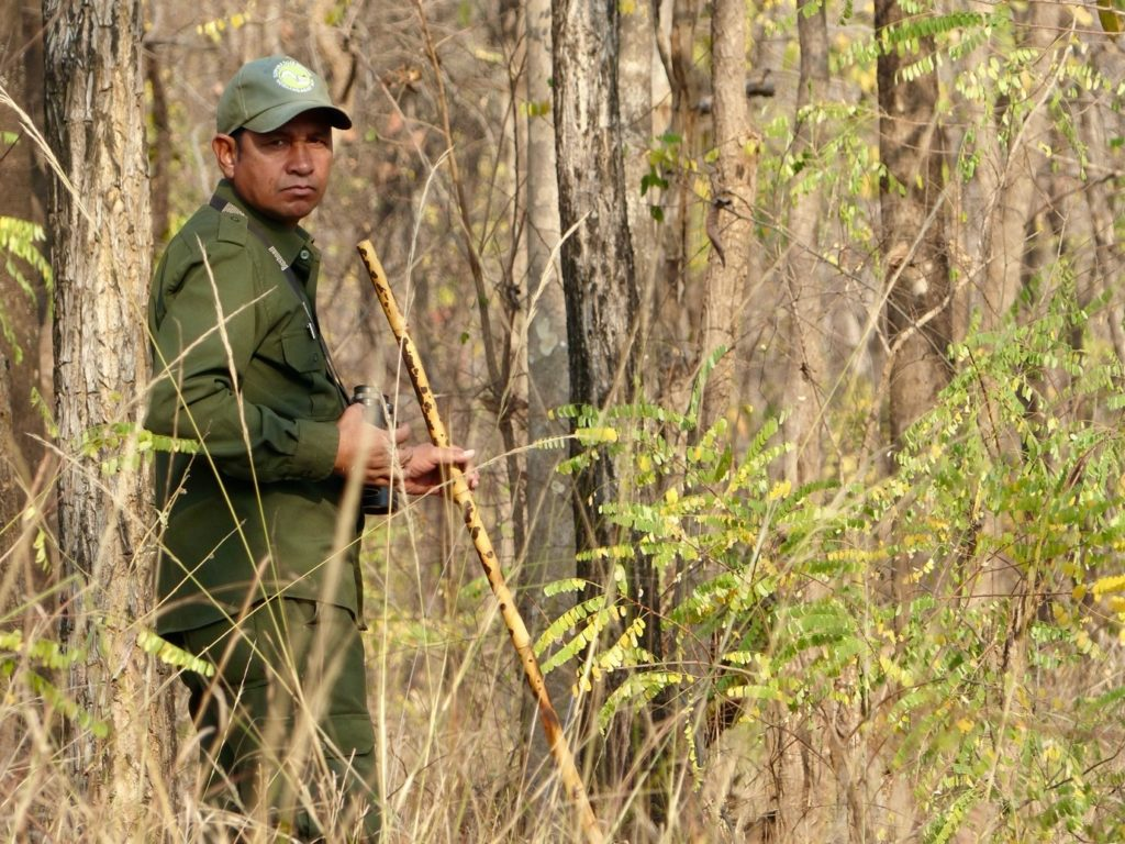A forest guide in India